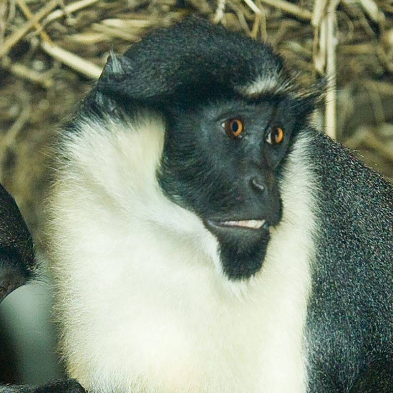 Primates Stall