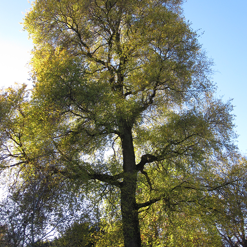 #Pianodrome Tree Tour