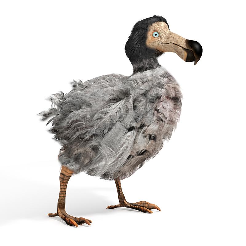 Bring back the Dodo?