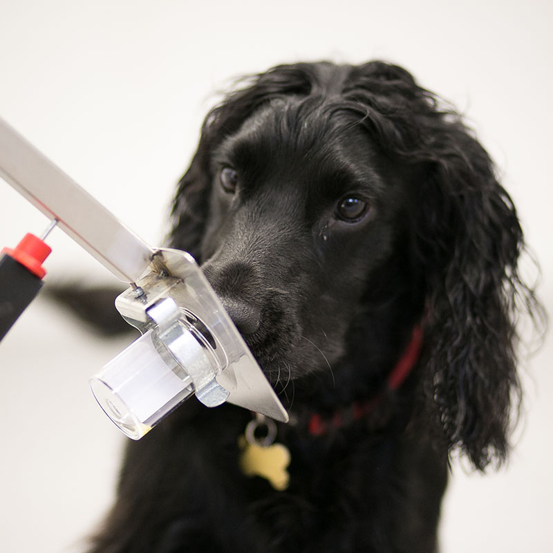 Technology for Dogs with Important Jobs